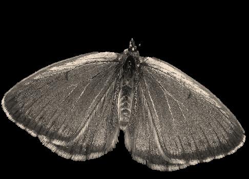 insetto-3
