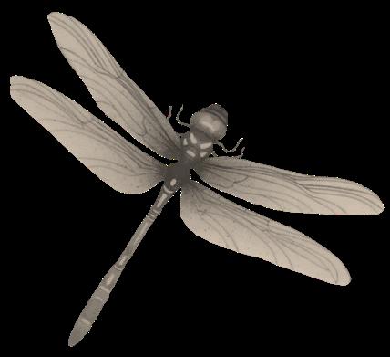 libellula-2
