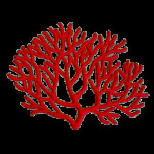 corallo-e1548626153674