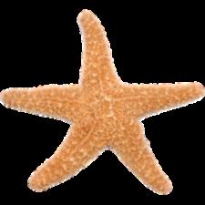 sticker-decorativo-stella-marina-297